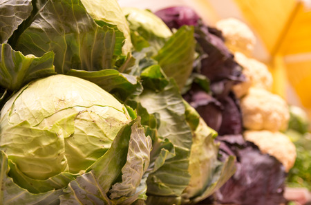 fresh green and purple cabbage at the market selective focus photo