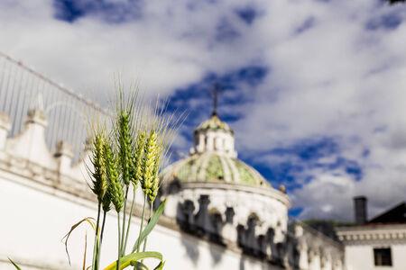 la compania: green plant with beautiful dome of La Compania church in the background Quito Ecuador South America selective focus Stock Photo
