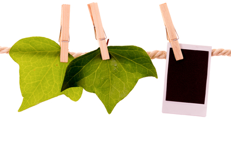 green leaves and instant photo hanging on a rope clothesline isolated on white photo