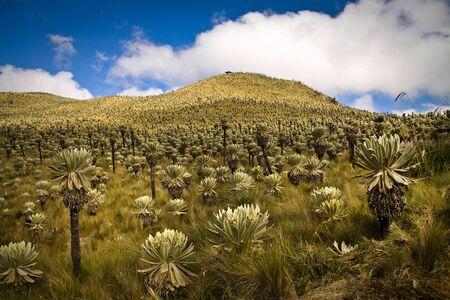 Breathtaking landscape in El Angel, ecological reserve, Carchi, Ecuador
