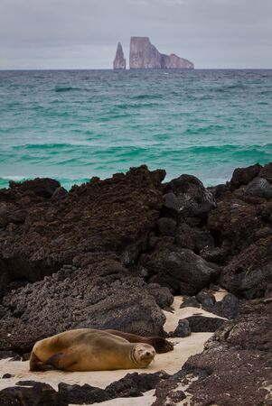 lions rock: Closeup portrait of sea lions relaxing in a beach with kicker rock in the background, Galapagos Islands , Ecuador Stock Photo