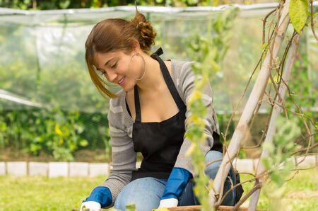 beautiful young woman gardening kneeling on her garden photo