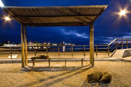 unafraid: Beautiful sea lions relaxing along the port in San Cristobal island, Galapagos, Ecuador