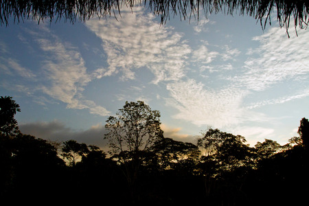 amazon rainforest: Silhouette of trees in the amazon rainforest against the blue sky, Yasuni National Park, Orellana, Ecuador