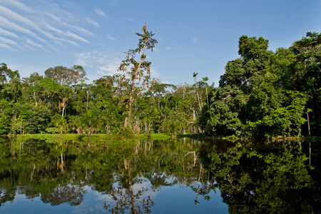 Beautiful green landscape of the amazon rainforest and its reflection on the river, Yasuni National Park, Orellana, Ecuador