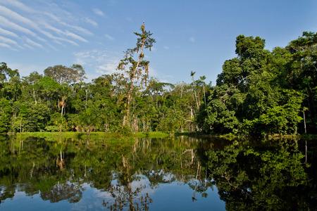 rio amazonas: Hermoso paisaje verde de la selva amazónica y su reflejo en el río, el Parque Nacional Yasuní, Orellana, Ecuador