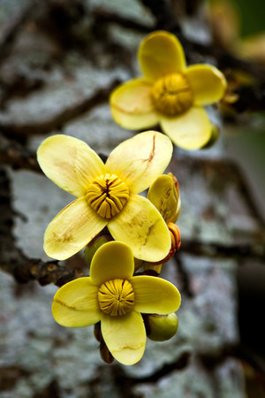 Close up shot of yeallow flowers in the amazon rainforest, Orellana, Ecuador Stock Photo