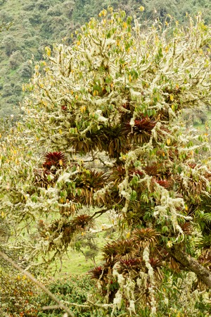 humid: Beautiful natural humid andean moor landscape in Oyacachi, Ecuador