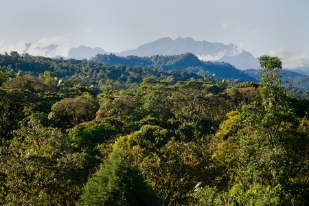 humid south: Beautiful view of Mindo in Ecuador cloud forest, South America
