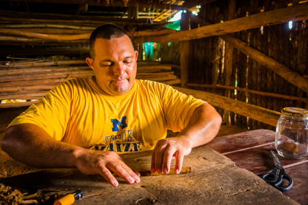 famous industries: VINALES, CUBA - SEPTEMBER 13, 2015: Handmade cigar live preparation by local cratsman and farmer