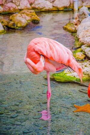 aviary: Pink flamingos close up, detail