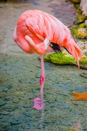 aviary: Pink flamingos close up, detail