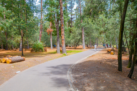 excercise: Amazing excercise park cover by trees and its shapes, some trunk of trees were chopped down Stock Photo