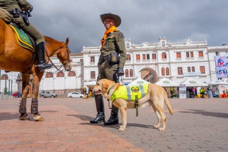 PASTO, COLOMBIA - JULY 3, 2016: unidentified policeman with a police dog standing next to a horse in the central square.