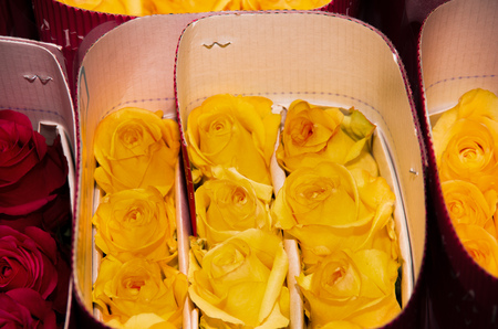 dozens: Bunch of beautiful dozens of blossoming yellow and red roses bouquets Stock Photo