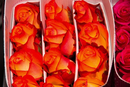 dozens: Close up of a bunch of beautiful dozens of blossoming orange rose bouquets Stock Photo