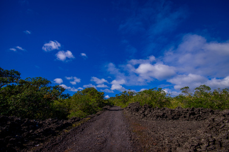 Rocky road inside of the Rangitoto island in Auckland, in a sunny day with a beautiful blue sky Stock Photo