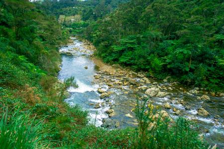 Calm river runs through the forest at Dickey Flat Campsite Karangahake, New Zealand Stock Photo