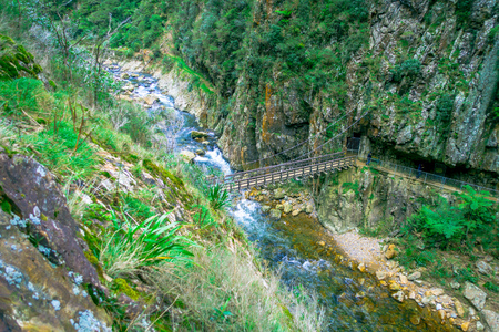 An unidentified people crossing a brindge and walking in natural walkway Karangahake Gorge, river flowing through Karangahake gorge surrounded by native rainforest, New Zealand Stock Photo
