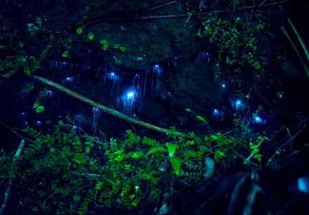 Amazing waitomo Glow worm in Caves, located in New Zealand Stock Photo - 80350763