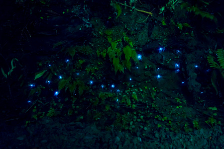 Amazing waitomo Glow worm in Caves, located in New Zealand Stock fotó - 80348538