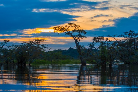 flood area: Sunset silhouetting a flooded jungle in Laguna Grande, in the Cuyabeno Wildlife Reserve, Amazon Basin, Ecuador