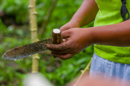tuberous: Cutting a root of yucca plant, inside of the amazon forest in Cuyabeno, Ecuador Stock Photo