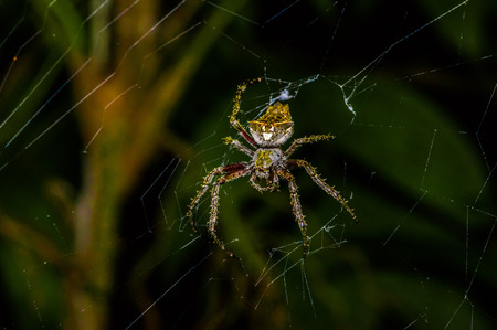 Spider inside of the Cuyabeno National Park, in Ecuador