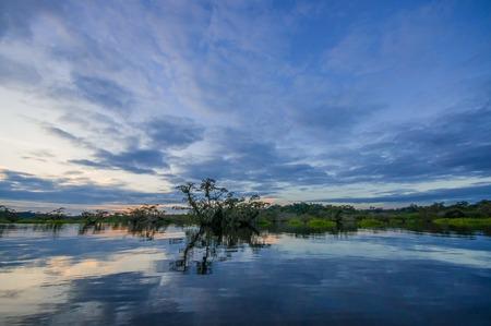 Cuyabeno 야생 동물 보호구, 아마존 분 지, 에콰도르에서에서 라구나 그란데에서 침수 정글 silhouetting 일몰 스톡 콘텐츠