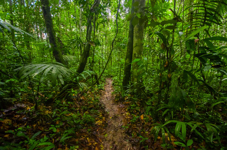Inside of the amazonian Jungle, surrounding of dense vegetation in the Cuyabeno National Park, South America Ecuador