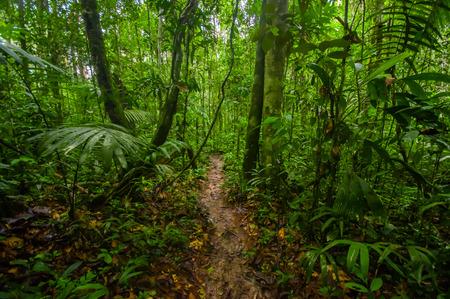 All'interno della giungla amazzonica, circondata da una vegetazione fitta nel Parco Nazionale di Cuyabeno, Sud America Ecuador Archivio Fotografico - 80553875