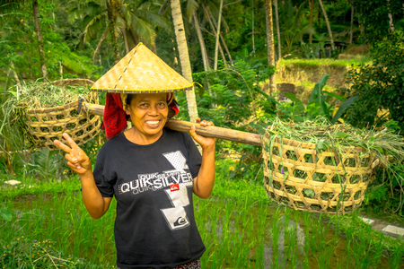 ubud: BALI, INDONESIA - APRIL 05, 2017: Women walk in the rice fields wearing a rice hat and holding with her hands a stick with two baskets in each side in Ubud, Bali, Indonesia Editorial