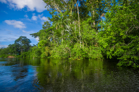 flood area: Dense vegetation on Cuyabeno river inside of the amazon rainforest in Cuyabeno Wildlife Reserve National Park, South America Ecuador