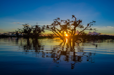 reserve: Trees silhouetted against an orange sky at sunset over Laguna Grande in the Cuyabeno Wildlife Reserve National Park, in Ecuador