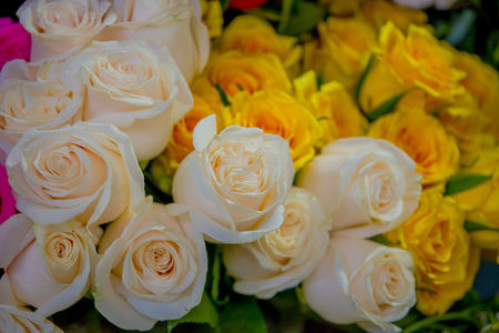 QUITO, ECUADOR - NOVEMBER 23, 2016: A bunch of white and yellow flowers in a market at the municipal market located in San Francisco in Quito city Editorial