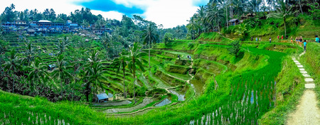 Beautiful landscape with green rice terraces near Tegallalang village, Ubud, Bali, Indonesia Stock Photo