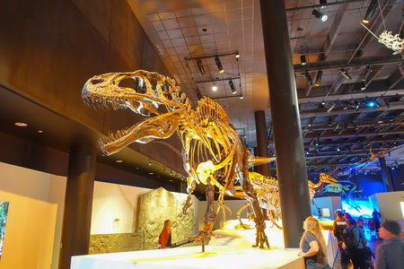 HOUSTON, USA - JANUARY 12, 2017: Fossil of dinosaur t-rex, the most amazing dinosaur depredator of that age, in a exposition in National Museum of Natural Science in Orlando Houston in USA