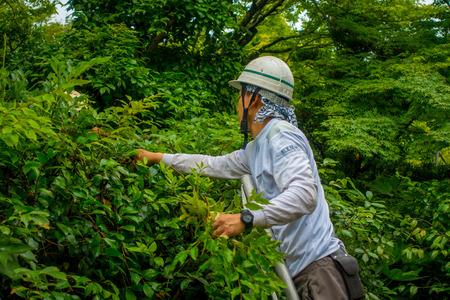 KYOTO, JAPAN - JULY 05, 2017: Hard working man gardening in Zen Garden of Tenryu-ji, Heavenly Dragon Temple. In Kyoto, Japan