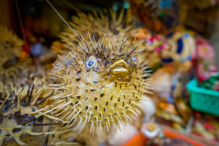 Dried fugu made by local people, in a market in hong kong. Stock Photo
