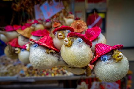 fish vendor: Dried fugu made by local people, in a market in hong kong. Stock Photo