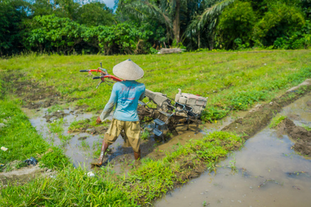 ubud: BALI, INDONESIA - APRIL 05, 2017: Farmer cleanning the area to plant some rice seeds in a flooded land in terraces, Ubud, Bali, Indonesia