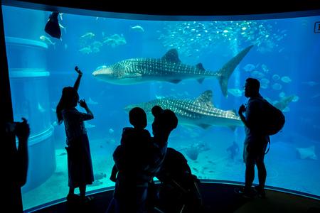 Schaduw van toeristen die beelden nemen en van overzeese schepselen genieten bij Osaka Aquarium Kaiyukan in Osaka, Japan. Stockfoto