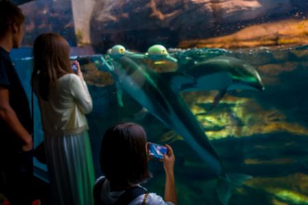 public aquarium: Dolphin in Osaka Aquarium Kaiyukan, one of the largest public aquariums in the world in Osaka, Japan.