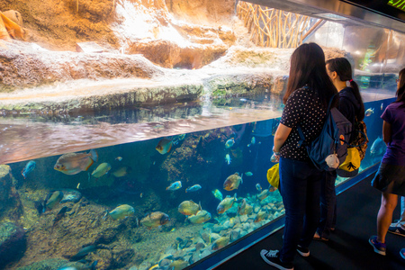 OSAKA, JAPAN - JULY 18, 2017: Unidentified people looking the ecuadorian species of fish originative from the Ecuadorian Rainforest in south america, at Aquarium of Osaka Editorial