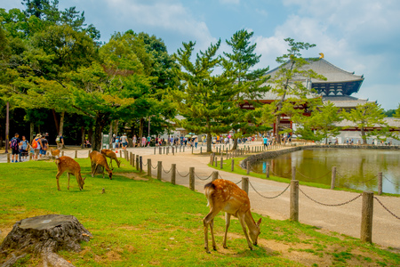 Nara, Japan - July 26, 2017: Unidentified people walking to Todai-ji temple with some wild deers in front, with an Eastern Great Temple behind. This temple is a Buddhist temple located in the city of Nara