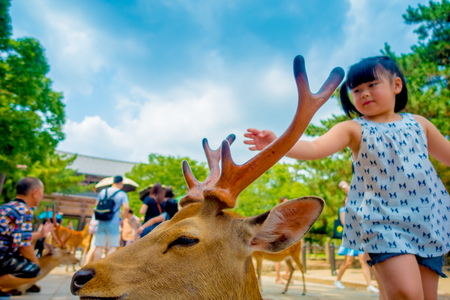 capita: Nara, Japan - July 26, 2017: Portrait of a beautiful wild deer with a little girl behind in Nara, Japan. Nara is a major tourism destination in Japan - former capita city and currently UNESCO World Heritage Site Editorial