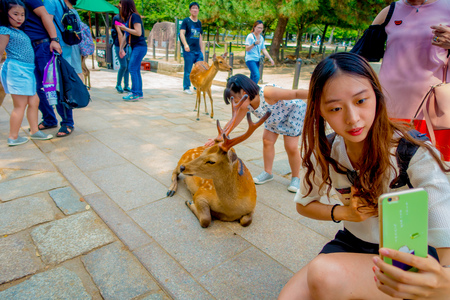 capita: Nara, Japan - July 26, 2017: Close up of unidentified woman taking a selfie of a wild deer in Nara, Japan. Nara is a major tourism destination in Japan - former capita city and currently UNESCO World Heritage Site