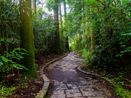 the abbot: Beautiful stoned path inside of the forest in Hakone park, located in Hakone, Japan.