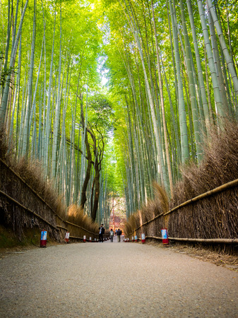 KYOTO, JAPAN - JULY 05, 2017:Unidentified pwoman walking in a path at beatiful bamboo forest at Arashiyama, Kyoto, Japan.