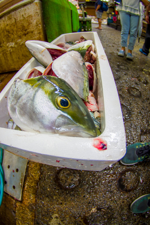 TOKYO, JAPAN JUNE 28 - 2017: Fish inside of a white boxes and seafood for sale at the Fish Market Tsukiji wholesale in Tokyo Japan, Tsukiji Market is the biggest wholesale fish and seafood market in the world. Fish eye effect